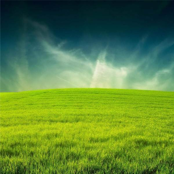 china Commercial Price golf artificial grass